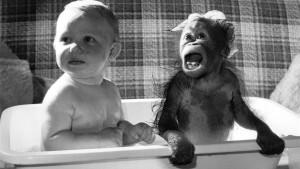 Darwin-copii-si-maimute
